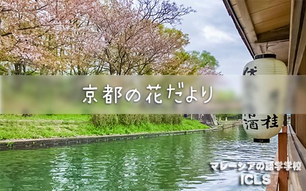 [日本支部]京都の花便り|マレーシアの日系語学学校ICLS